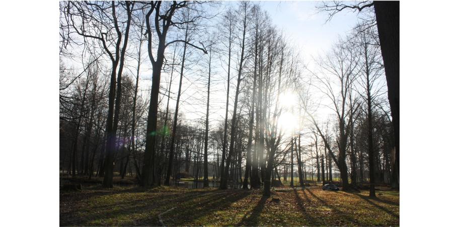 Erster Bestattungswald Niederschlesiens